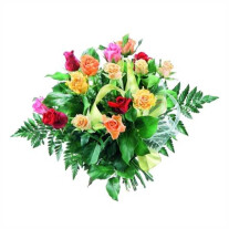 Flowers- colourful roses